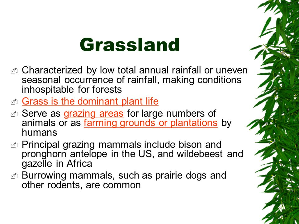 Grassland  Characterized by low total annual rainfall or uneven seasonal occurrence of rainfall, making conditions inhospitable for forests  Grass i