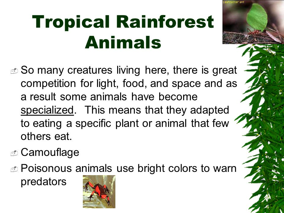 Tropical Rainforest Animals  So many creatures living here, there is great competition for light, food, and space and as a result some animals have b