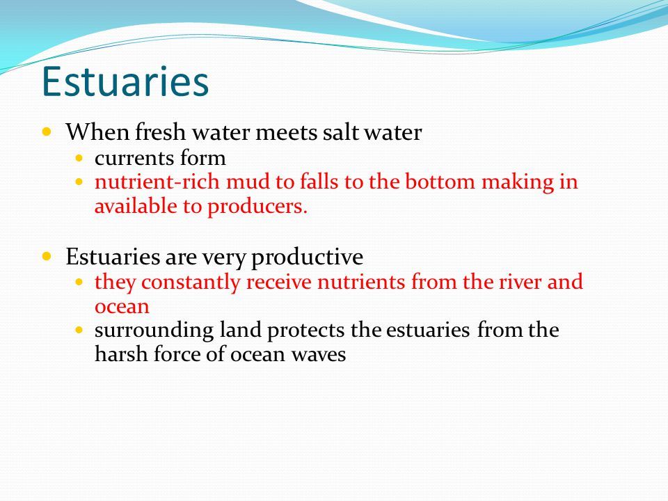 Estuaries When fresh water meets salt water currents form nutrient-rich mud to falls to the bottom making in available to producers. Estuaries are ver