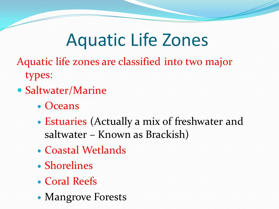 Marine Biome Also has horizontal zones (intertidal, neritic, oceanic [500-11,000 m]) Neritic: Coastal waters; lots of photosynthesis; majority of ocean life lives here.