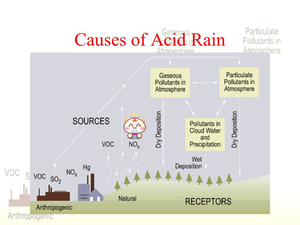 Causes of Acid Rain Sulphur dioxide (SO2) and nitrogen oxides (NOx) are the primary causes of acid rain. Acid rain occurs when these gases react in th