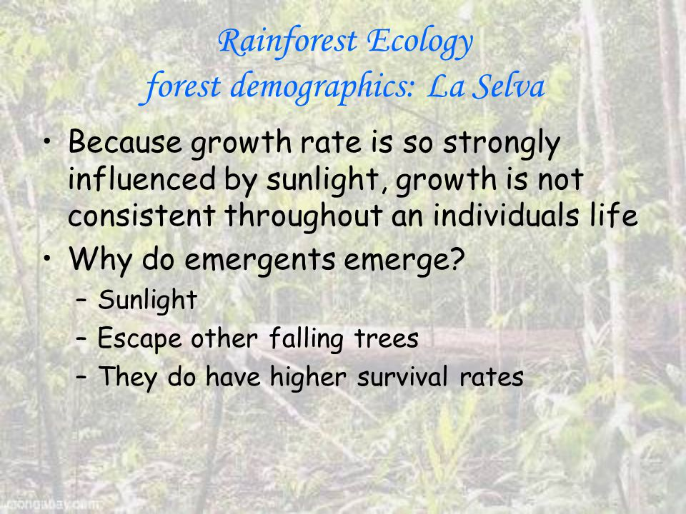 Rainforest Ecology forest demographics: La Selva Because growth rate is so strongly influenced by sunlight, growth is not consistent throughout an individuals life Why do emergents emerge.