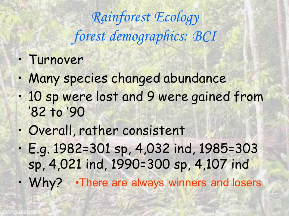 Rainforest Ecology forest demographics: BCI Turnover Many species changed abundance 10 sp were lost and 9 were gained from '82 to '90 Overall, rather consistent E.g.