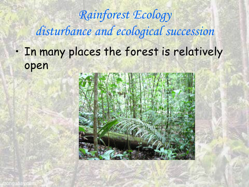 Rainforest Ecology disturbance and ecological succession In many places the forest is relatively open