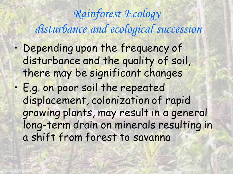 Rainforest Ecology disturbance and ecological succession Depending upon the frequency of disturbance and the quality of soil, there may be significant changes E.g.