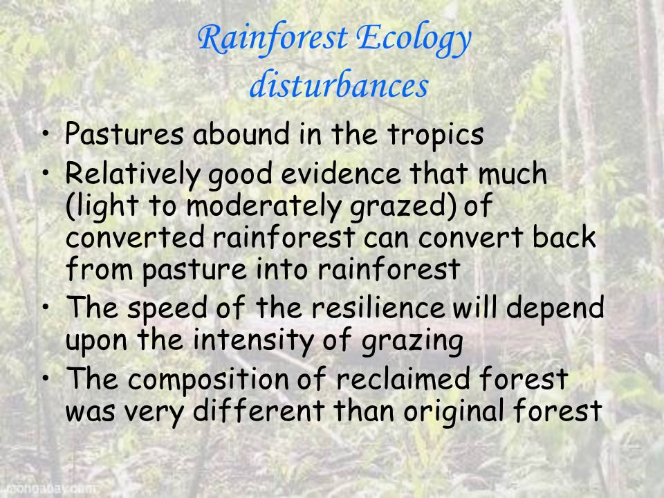 Rainforest Ecology disturbances Pastures abound in the tropics Relatively good evidence that much (light to moderately grazed) of converted rainforest can convert back from pasture into rainforest The speed of the resilience will depend upon the intensity of grazing The composition of reclaimed forest was very different than original forest