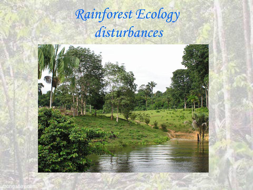 Rainforest Ecology disturbances