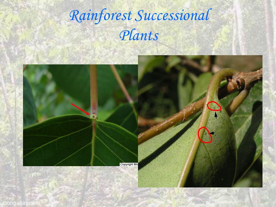 Rainforest Successional Plants