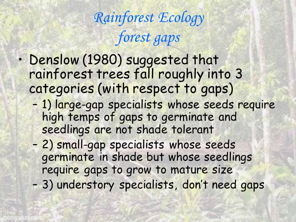 Rainforest Ecology forest gaps Denslow (1980) suggested that rainforest trees fall roughly into 3 categories (with respect to gaps) –1) large-gap specialists whose seeds require high temps of gaps to germinate and seedlings are not shade tolerant –2) small-gap specialists whose seeds germinate in shade but whose seedlings require gaps to grow to mature size –3) understory specialists, don't need gaps