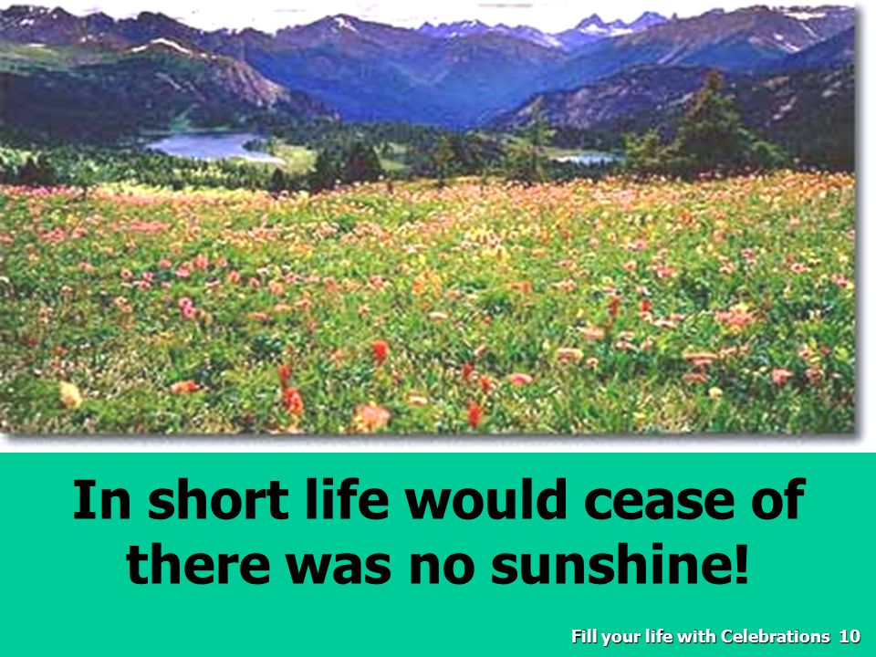 Fill your life with Celebrations10 In short life would cease of there was no sunshine.