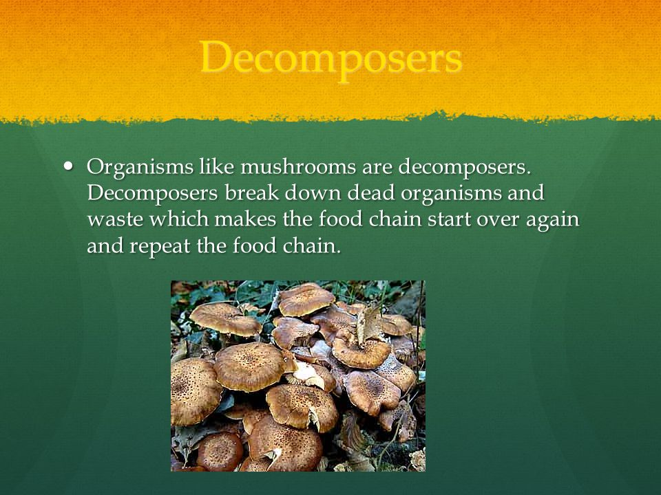 Decomposers Organisms like mushrooms are decomposers.