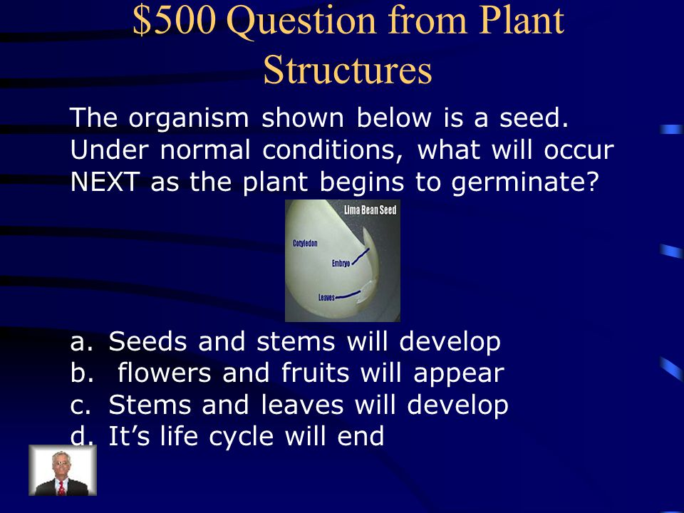 $400 Answer from Plant Structures Thick stem