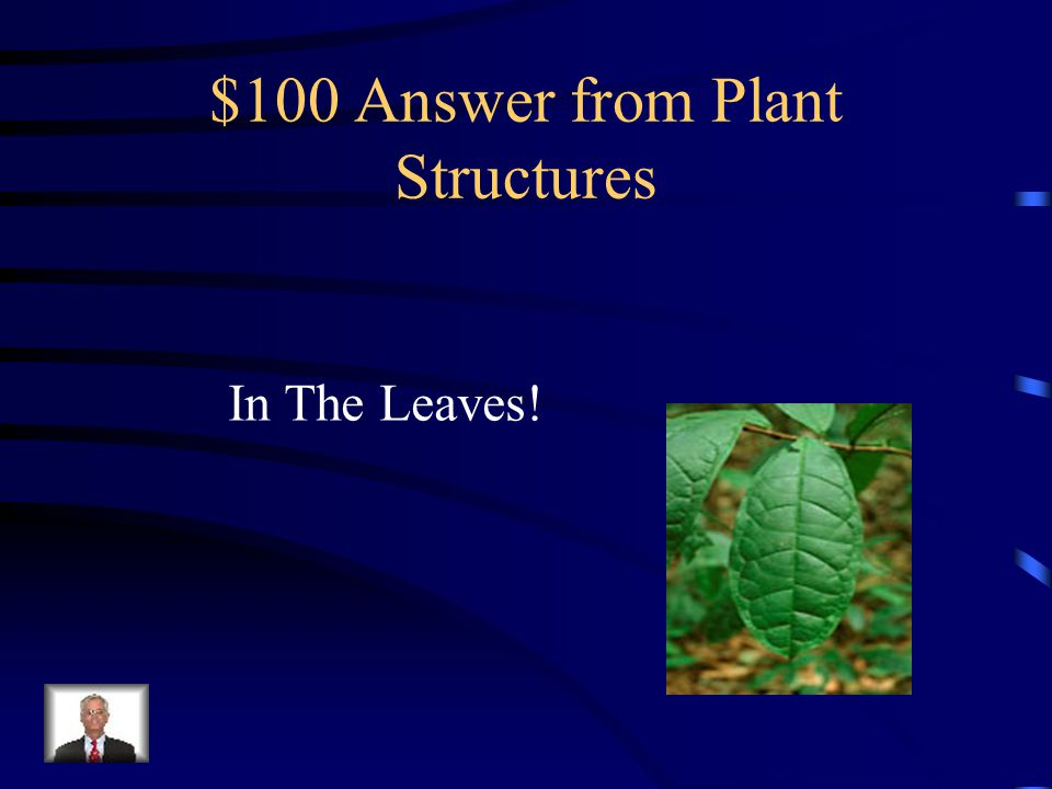 $100 Question from Plant Structures Which structure of the plant is MOSTLY responsible for collecting the sun's energy and using it to produce glucose?