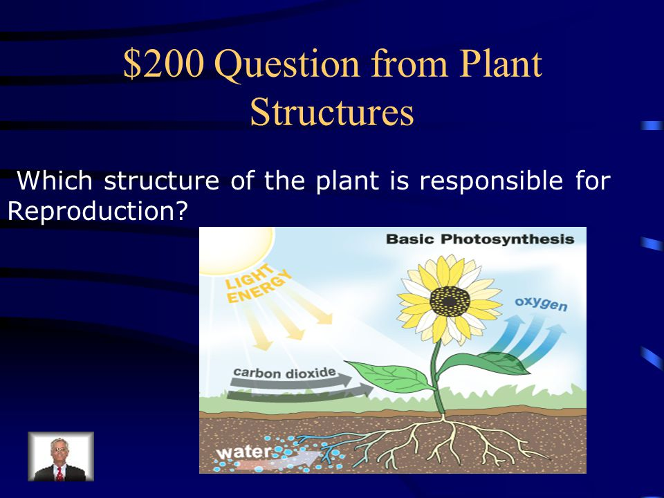 $100 Answer from Plant Structures In The Leaves!