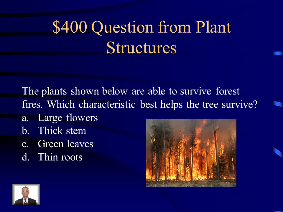 $300 Answer from Plant Structures roots