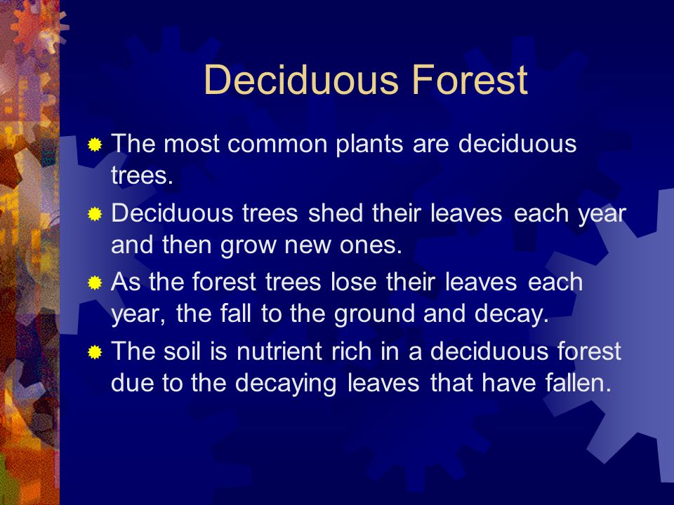 Deciduous Forest  The most common plants are deciduous trees.  Deciduous trees shed their leaves each year and then grow new ones.  As the forest t