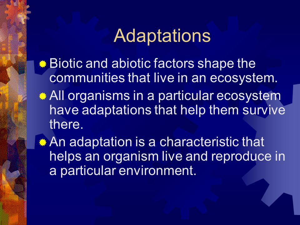Adaptations  Biotic and abiotic factors shape the communities that live in an ecosystem.  All organisms in a particular ecosystem have adaptations t