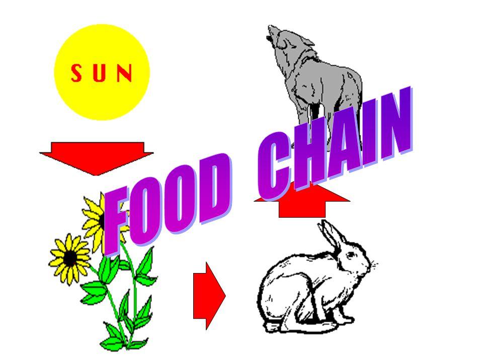 LEC. Biology Ecosystems Benchmark 2 Explain how energy flows through familiar ecosystems.