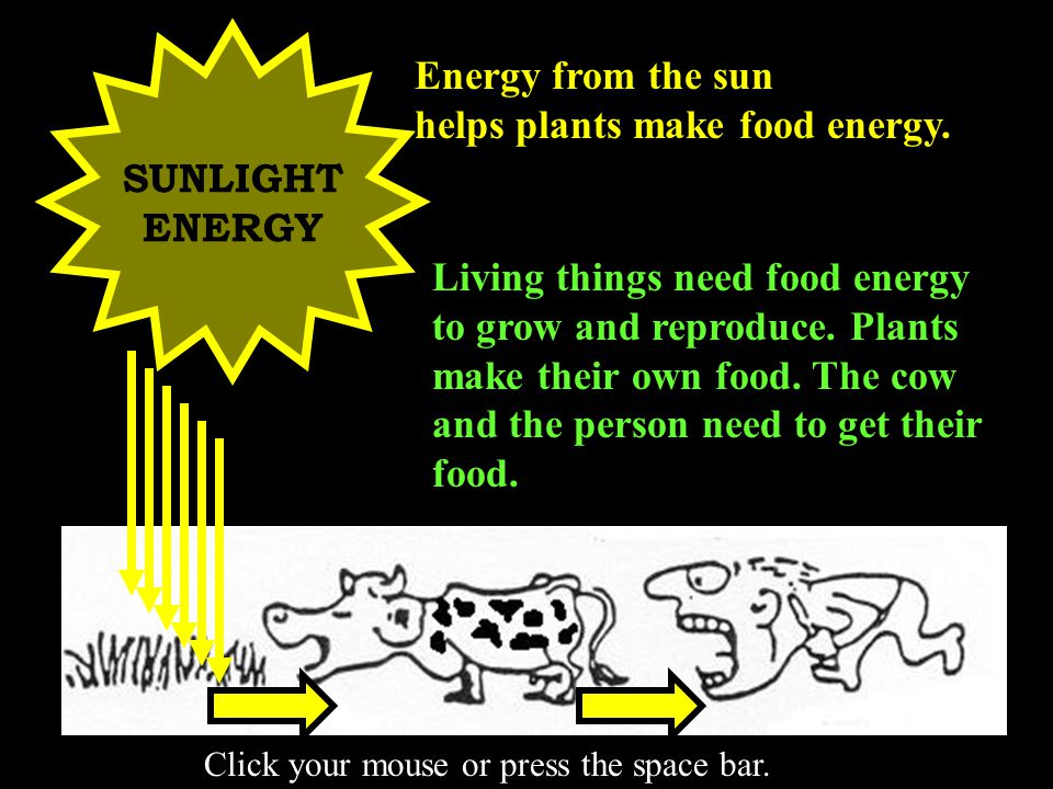 THE FOOD FACTORY Leaves are the energy factories of the plant.