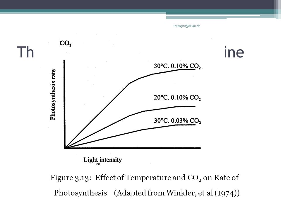 The Aerial Structure Of The Vine Figure 3.13: Effect of Temperature and CO 2 on Rate of Photosynthesis (Adapted from Winkler, et al (1974)) tcreagh@ei