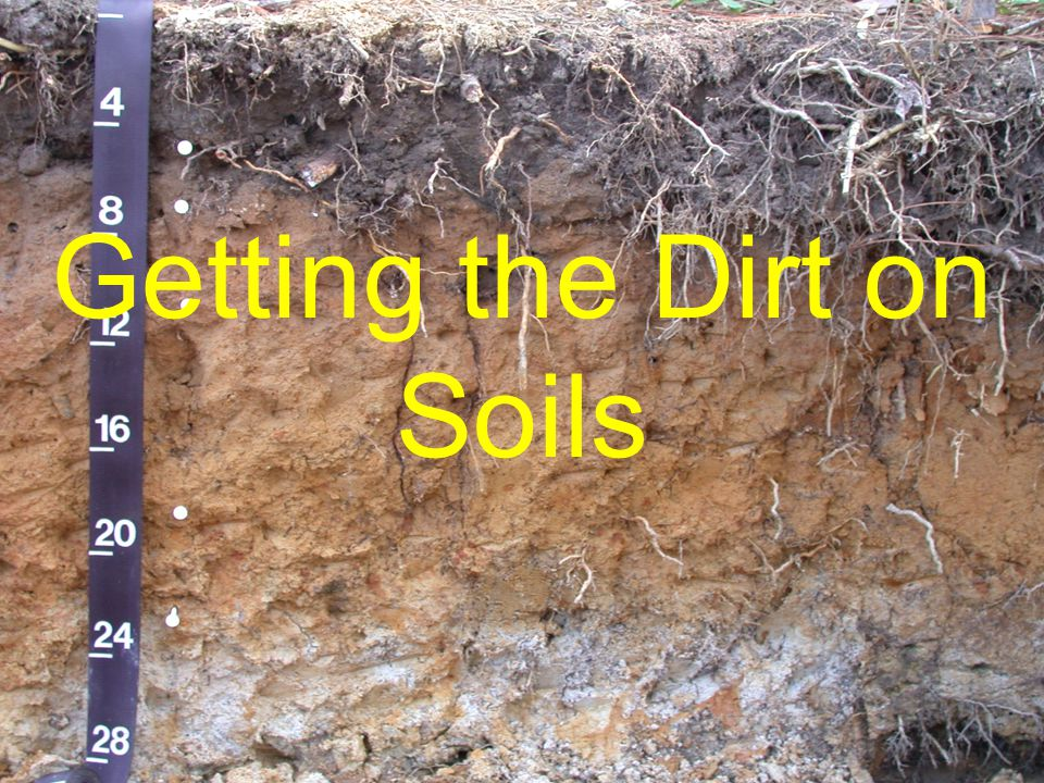 NC STATE UNIVERSITY DEPARTMENT of SOIL SCIENCE NC STATE UNIVERSITY DEPARTMENT of SOIL SCIENCE Getting the Dirt on Soils