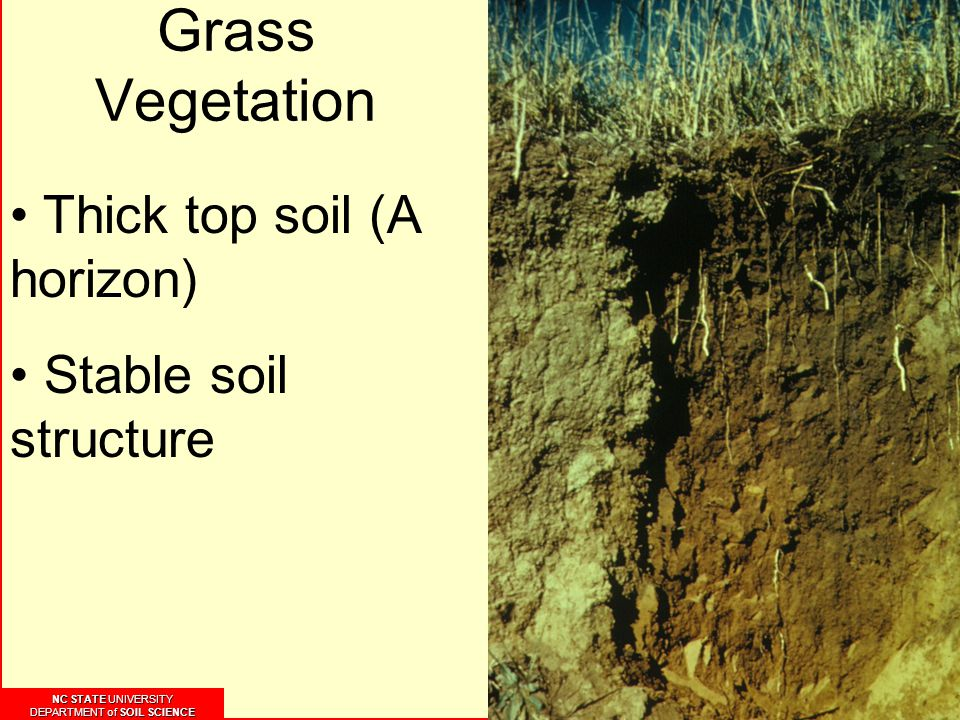 NC STATE UNIVERSITY DEPARTMENT of SOIL SCIENCE NC STATE UNIVERSITY DEPARTMENT of SOIL SCIENCE Grass Vegetation Thick top soil (A horizon) Stable soil structure