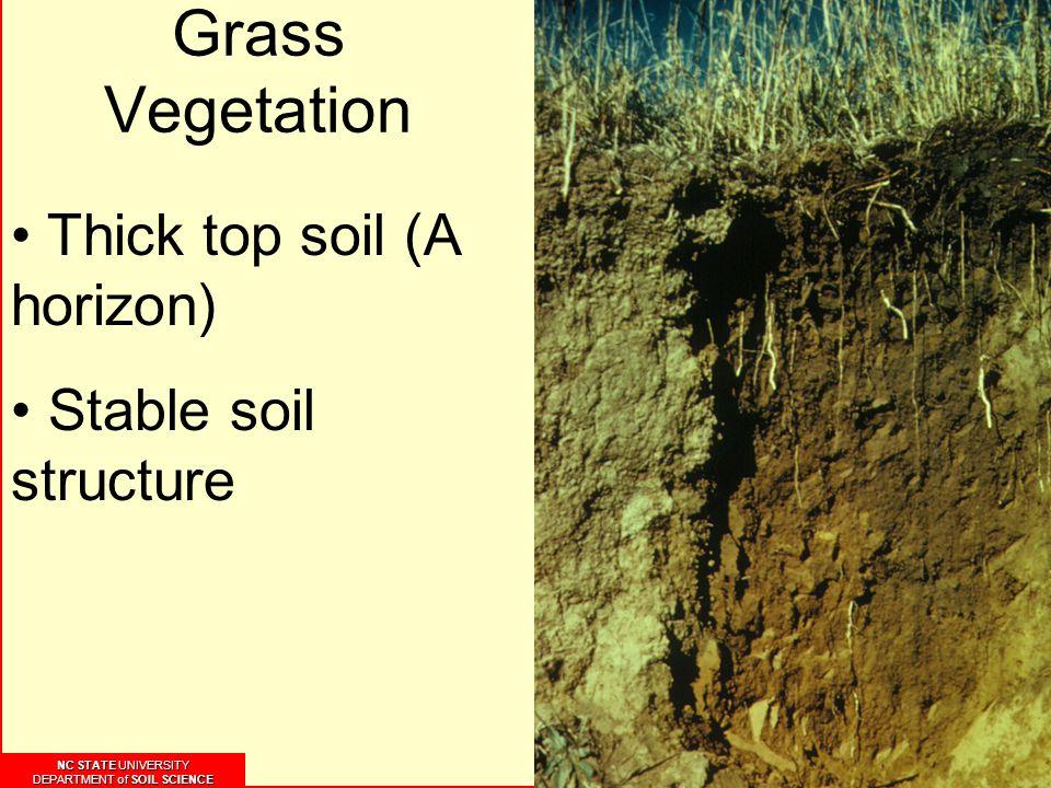 NC STATE UNIVERSITY DEPARTMENT of SOIL SCIENCE NC STATE UNIVERSITY DEPARTMENT of SOIL SCIENCE Grass Vegetation Thick top soil (A horizon) Stable soil