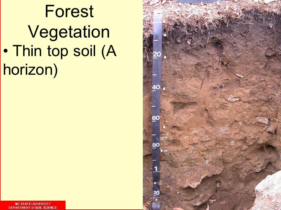 NC STATE UNIVERSITY DEPARTMENT of SOIL SCIENCE NC STATE UNIVERSITY DEPARTMENT of SOIL SCIENCE Forest Vegetation Thin top soil (A horizon)