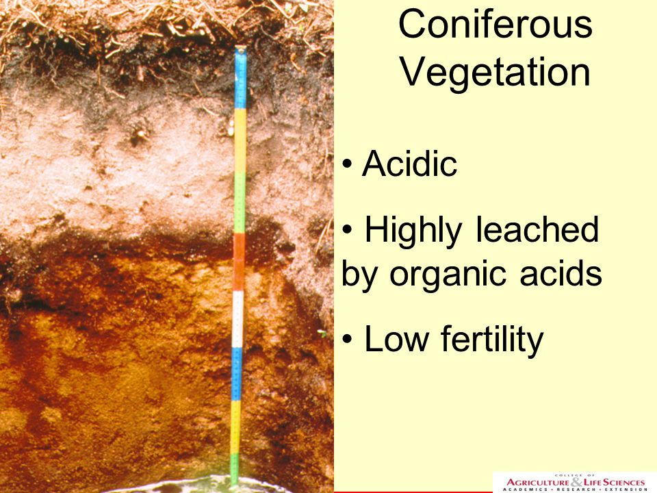 NC STATE UNIVERSITY DEPARTMENT of SOIL SCIENCE NC STATE UNIVERSITY DEPARTMENT of SOIL SCIENCE Coniferous Vegetation Acidic Highly leached by organic a
