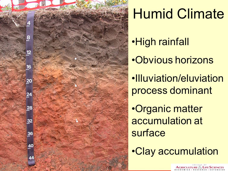 NC STATE UNIVERSITY DEPARTMENT of SOIL SCIENCE NC STATE UNIVERSITY DEPARTMENT of SOIL SCIENCE Humid Climate High rainfall Obvious horizons Illuviation/eluviation process dominant Organic matter accumulation at surface Clay accumulation