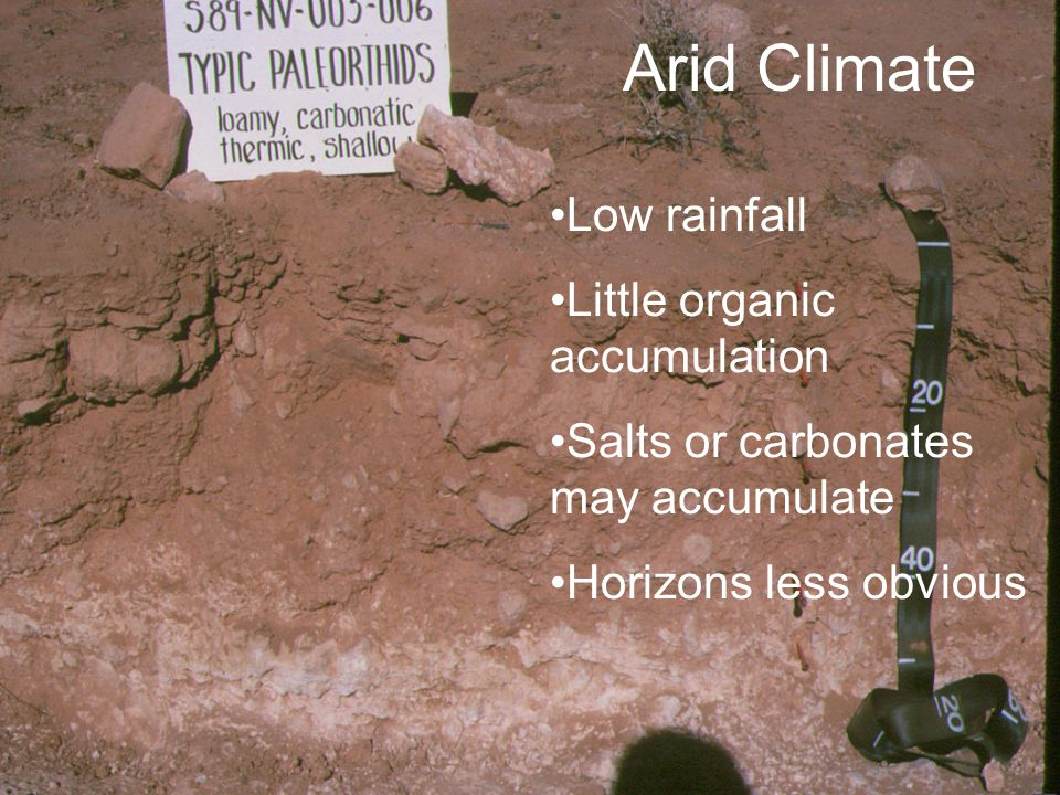 NC STATE UNIVERSITY DEPARTMENT of SOIL SCIENCE NC STATE UNIVERSITY DEPARTMENT of SOIL SCIENCE Arid Climate Low rainfall Little organic accumulation Sa