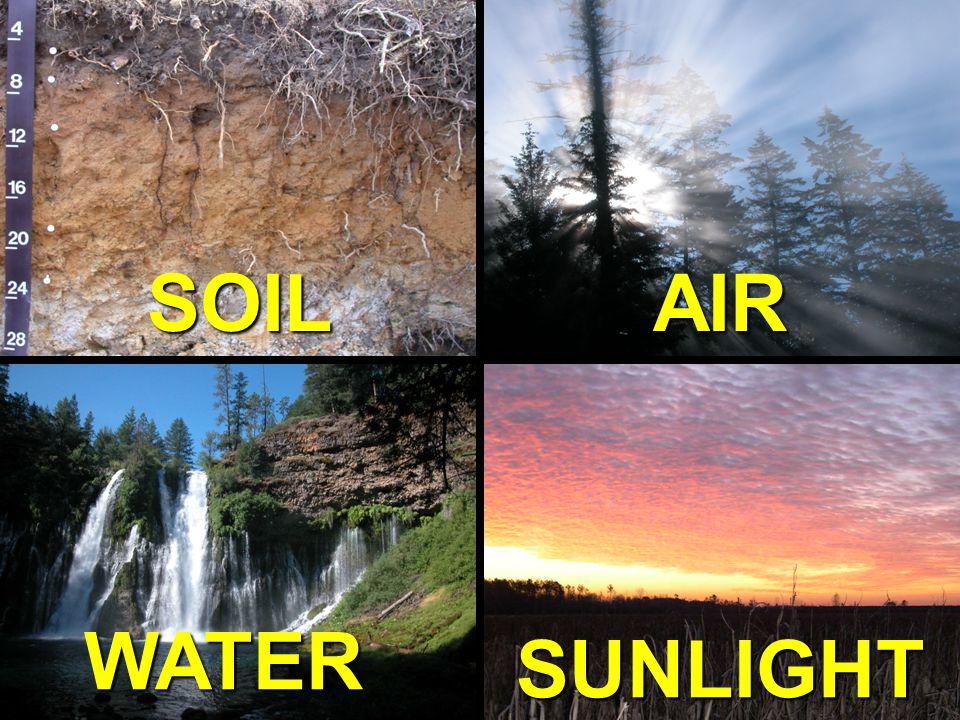 NC STATE UNIVERSITY DEPARTMENT of SOIL SCIENCE NC STATE UNIVERSITY DEPARTMENT of SOIL SCIENCE Does Soil = Dirt?