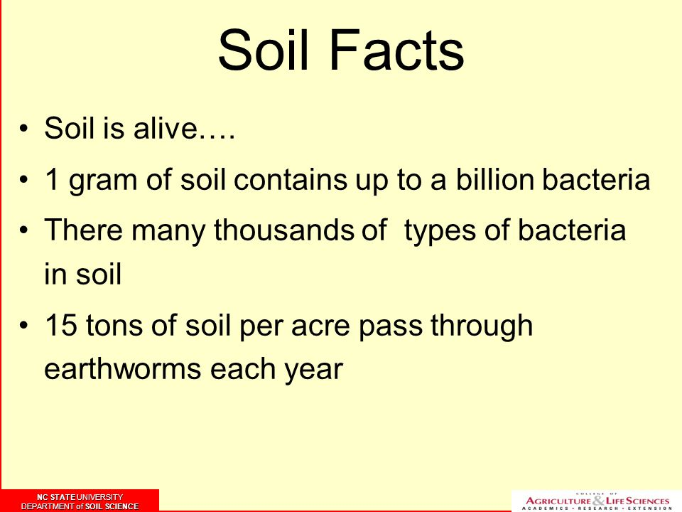 NC STATE UNIVERSITY DEPARTMENT of SOIL SCIENCE NC STATE UNIVERSITY DEPARTMENT of SOIL SCIENCE Soil Facts Soil is alive…. 1 gram of soil contains up to