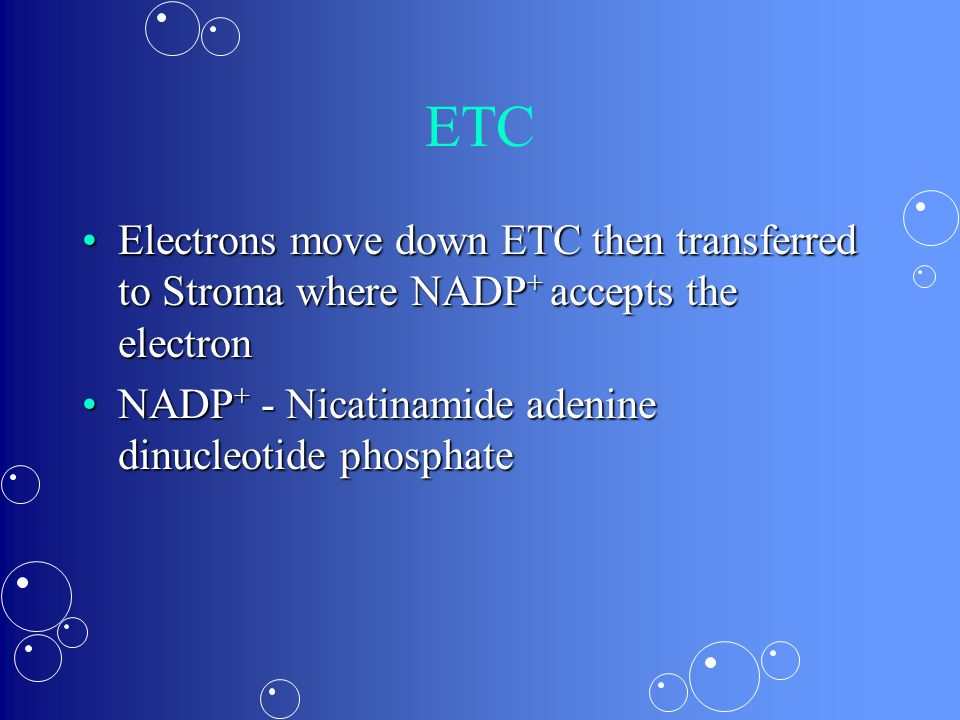 ETC Electrons move down ETC then transferred to Stroma where NADP + accepts the electronElectrons move down ETC then transferred to Stroma where NADP + accepts the electron NADP + - Nicatinamide adenine dinucleotide phosphateNADP + - Nicatinamide adenine dinucleotide phosphate
