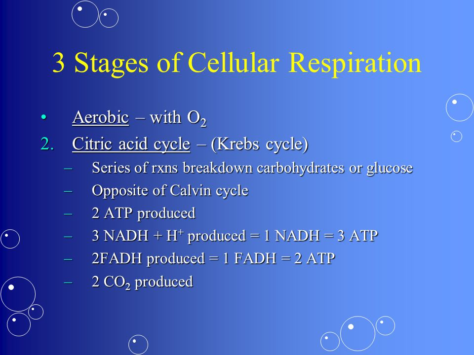 3 Stages of Cellular Respiration Aerobic – with O 2Aerobic – with O 2 2.Citric acid cycle – (Krebs cycle) –Series of rxns breakdown carbohydrates or glucose –Opposite of Calvin cycle –2 ATP produced –3 NADH + H + produced = 1 NADH = 3 ATP –2FADH produced = 1 FADH = 2 ATP –2 CO 2 produced