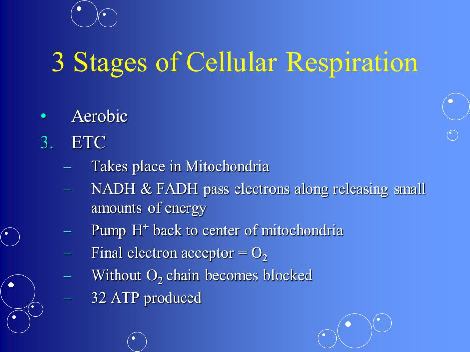 3 Stages of Cellular Respiration AerobicAerobic 3.ETC –Takes place in Mitochondria –NADH & FADH pass electrons along releasing small amounts of energy –Pump H + back to center of mitochondria –Final electron acceptor = O 2 –Without O 2 chain becomes blocked –32 ATP produced