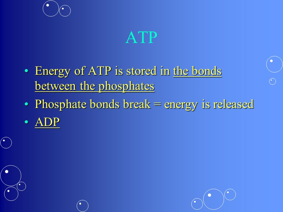 ATP Energy of ATP is stored in the bonds between the phosphatesEnergy of ATP is stored in the bonds between the phosphates Phosphate bonds break = energy is releasedPhosphate bonds break = energy is released ADPADP