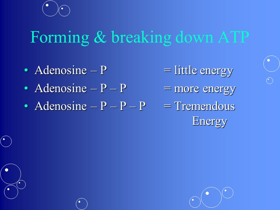 Forming & breaking down ATP Adenosine – P= little energyAdenosine – P= little energy Adenosine – P – P= more energyAdenosine – P – P= more energy Adenosine – P – P – P= Tremendous EnergyAdenosine – P – P – P= Tremendous Energy