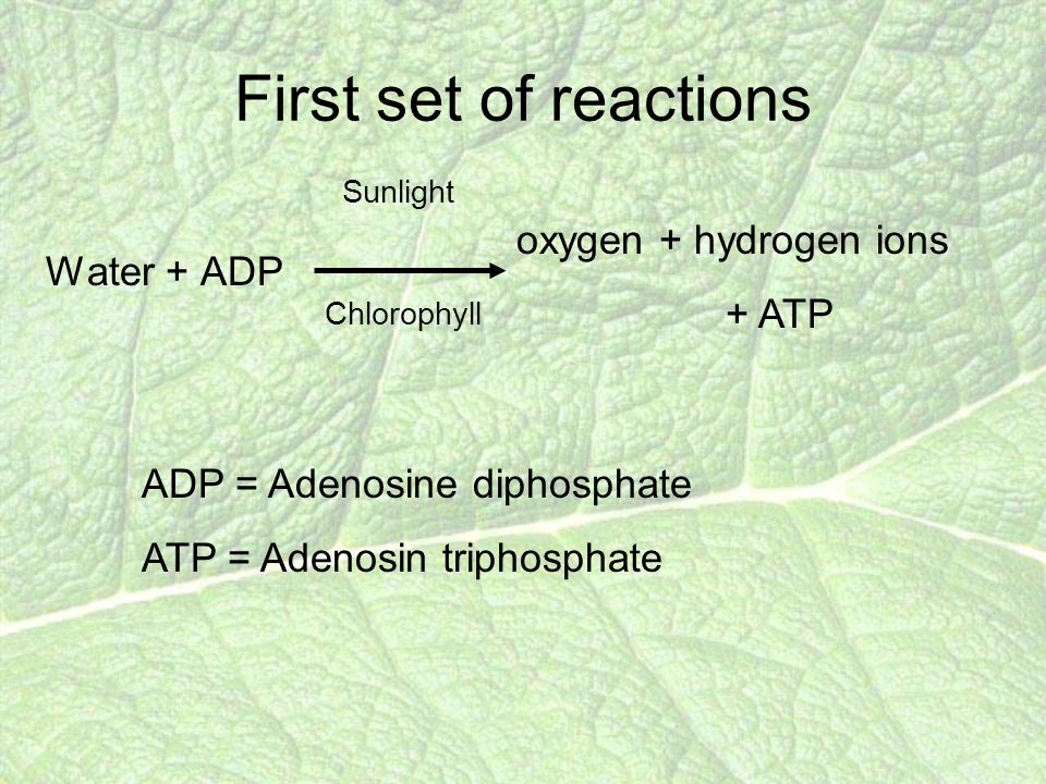 First set of reactions Water + ADP Sunlight Chlorophyll oxygen + hydrogen ions + ATP ADP = Adenosine diphosphate ATP = Adenosin triphosphate