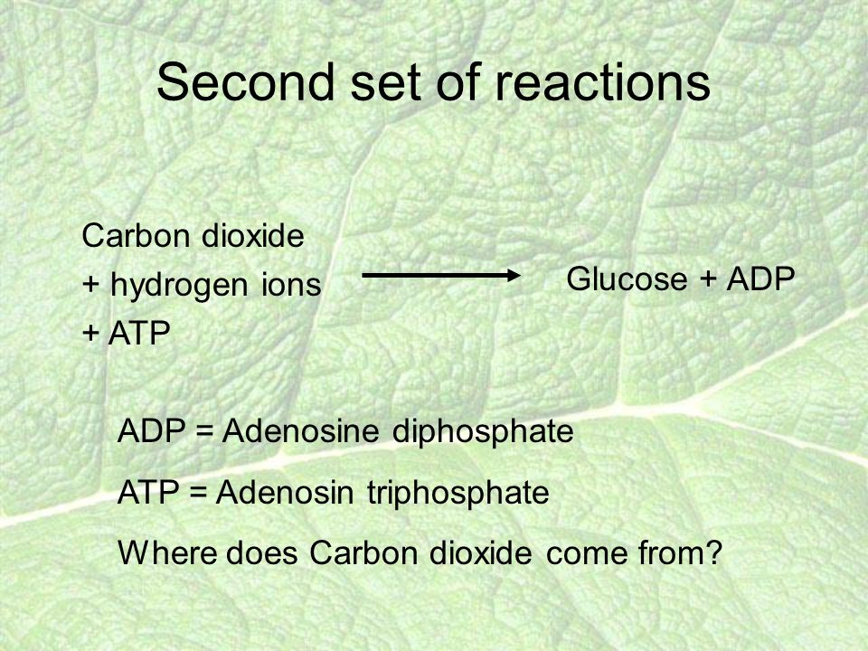 Second set of reactions Carbon dioxide + hydrogen ions + ATP ADP = Adenosine diphosphate ATP = Adenosin triphosphate Where does Carbon dioxide come from.