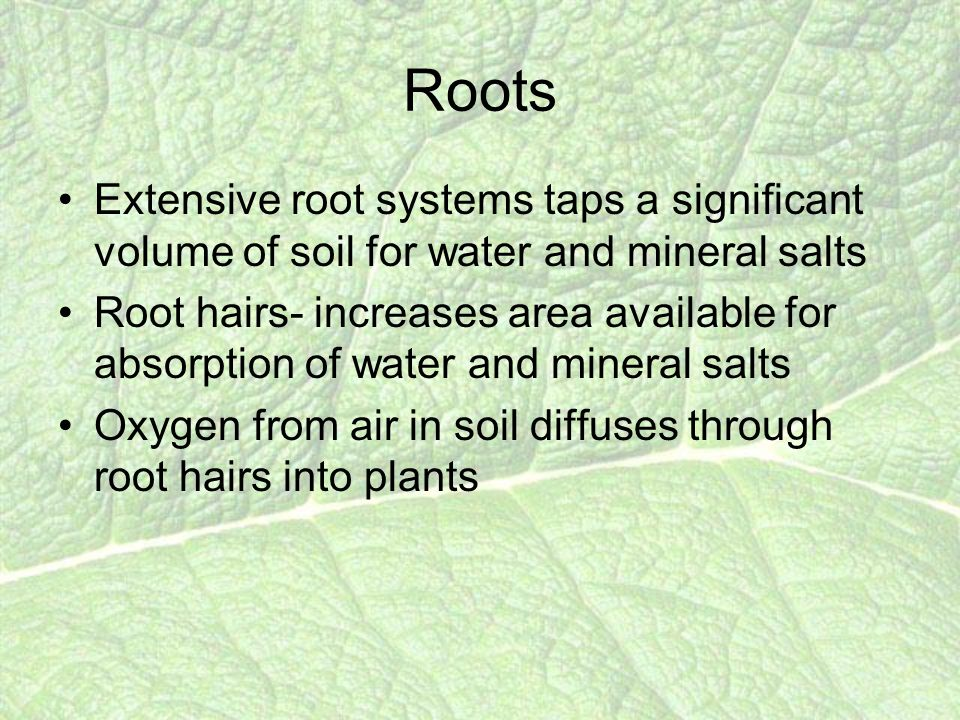 Roots Extensive root systems taps a significant volume of soil for water and mineral salts Root hairs- increases area available for absorption of water and mineral salts Oxygen from air in soil diffuses through root hairs into plants