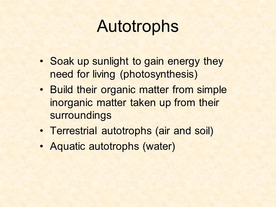 Soak up sunlight to gain energy they need for living (photosynthesis) Build their organic matter from simple inorganic matter taken up from their surroundings Terrestrial autotrophs (air and soil) Aquatic autotrophs (water) Autotrophs