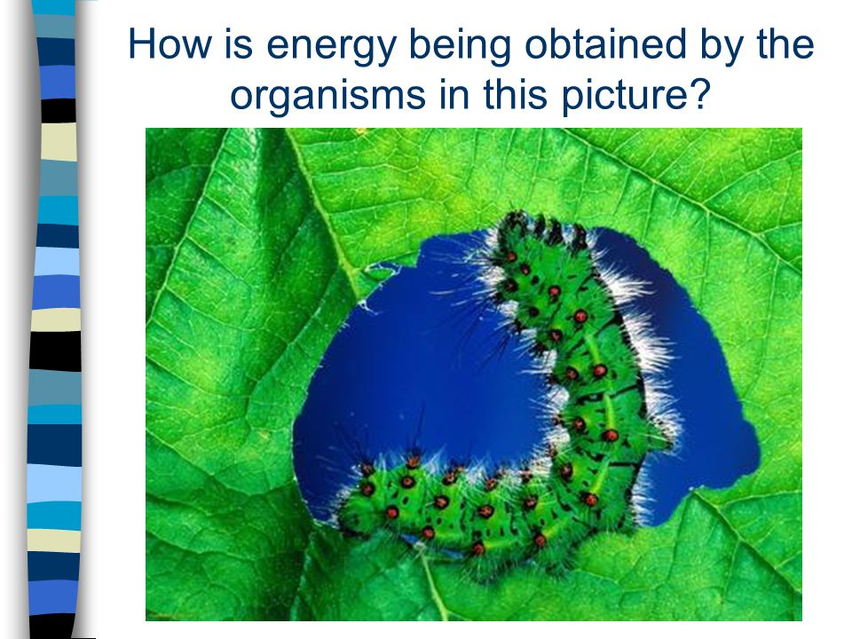 Autotrophs & Heterotrophs (Review) Plants are able to use light energy from the sun to produce food.