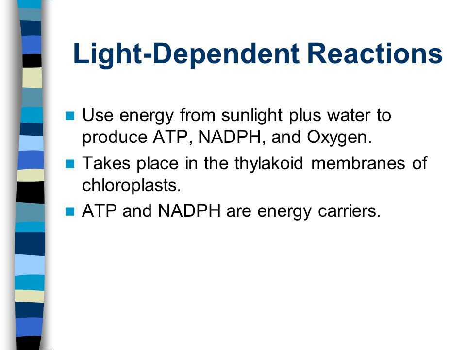 Light-Dependent Reactions Use energy from sunlight plus water to produce ATP, NADPH, and Oxygen. Takes place in the thylakoid membranes of chloroplast