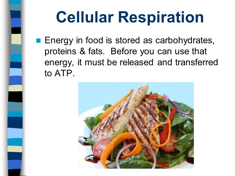 Cellular Respiration Energy in food is stored as carbohydrates, proteins & fats. Before you can use that energy, it must be released and transferred t