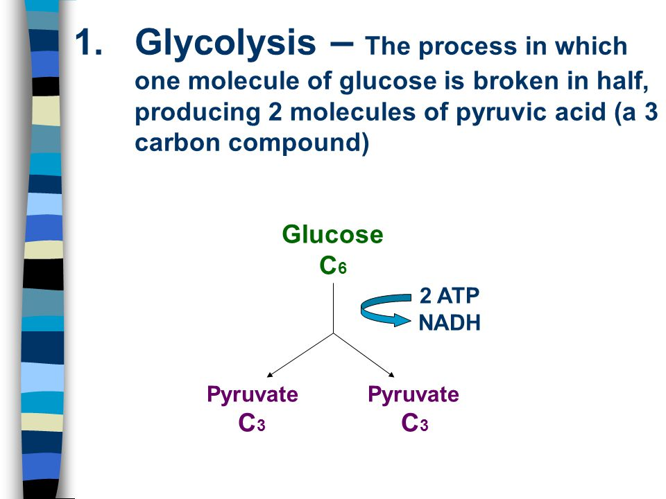 1.Glycolysis – The process in which one molecule of glucose is broken in half, producing 2 molecules of pyruvic acid (a 3 carbon compound) Glucose C 6
