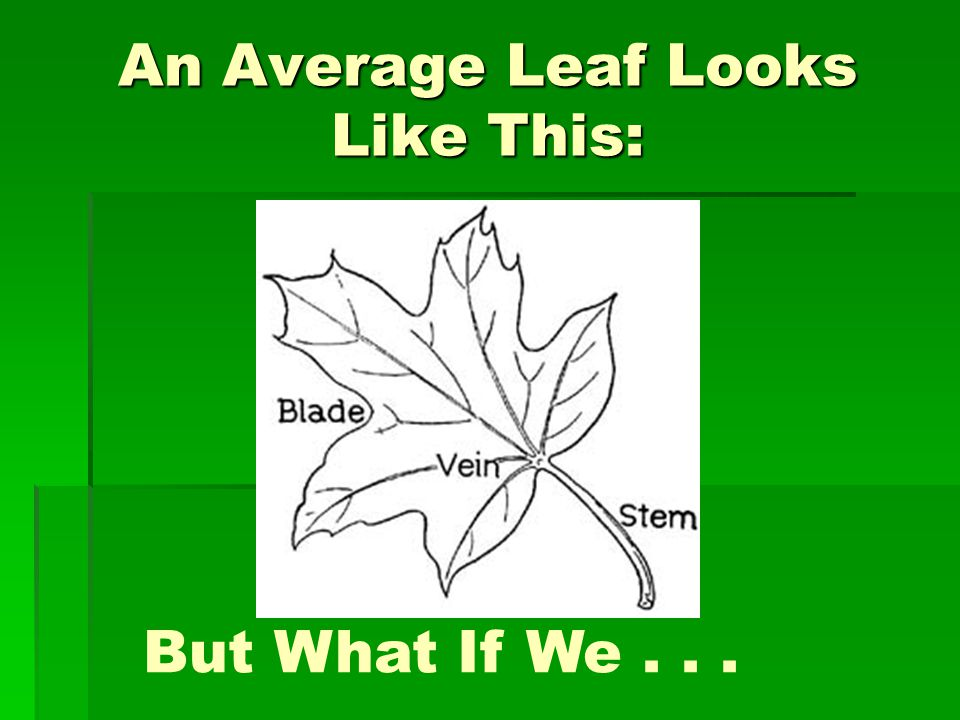 An Average Leaf Looks Like This: But What If We...