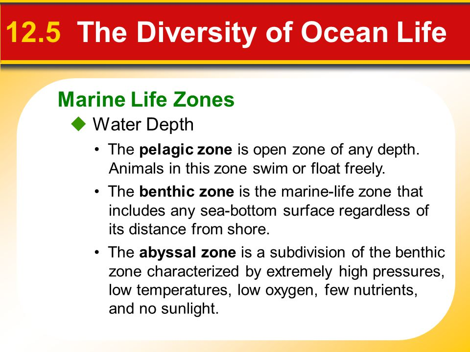  Water Depth 12.5 The Diversity of Ocean Life The pelagic zone is open zone of any depth.