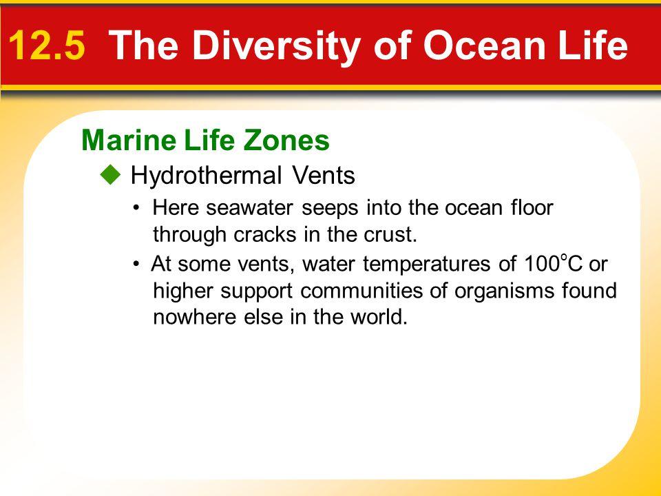 Marine Life Zones  Hydrothermal Vents 12.5 The Diversity of Ocean Life Here seawater seeps into the ocean floor through cracks in the crust.