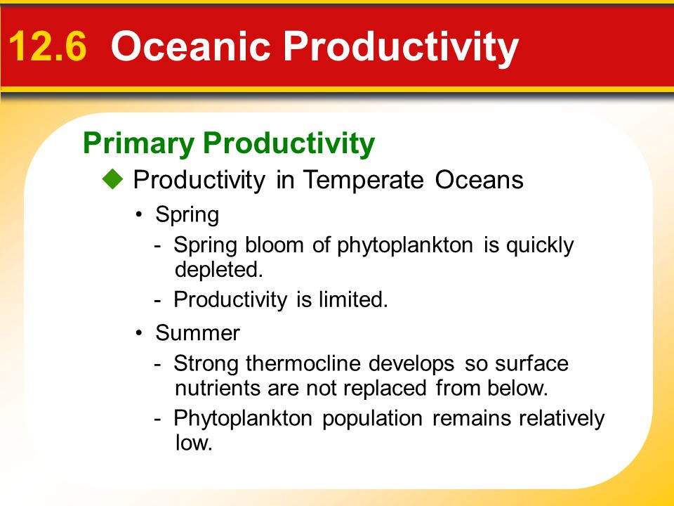 Primary Productivity  Productivity in Temperate Oceans 12.6 Oceanic Productivity Summer - Phytoplankton population remains relatively low.